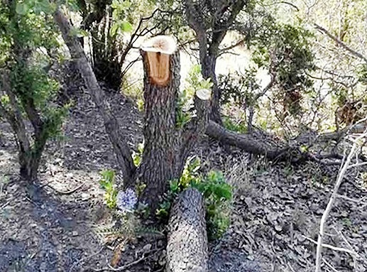 وضعیت ۱۴ میلیون هکتار منطقه جنگلی کشور