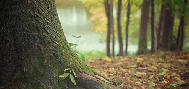 آلودگی هوا موجب سوء تغذیه درختان میشود