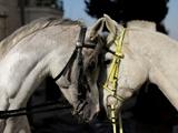 اسبها احساسات انسانی را درک میکنند