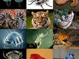 مجله جانوران