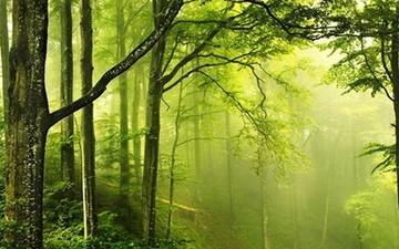 اجرای جنگلکاری اقتصادی در ۱۴۰۰ هکتار از اراضی لرستان