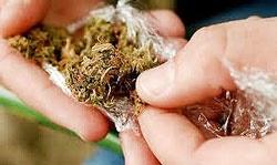 گل و حشیش ؛ بیشترین کشفیات مواد مخدر در اطراف مدارس