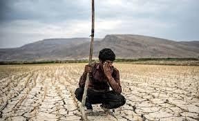 کشاورزان فارس بیشترین آسیب را از خشکسالی متحمل شدهاند