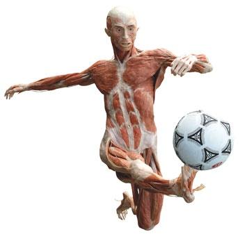 فوتبال سلامتبخش است