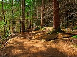 کاهش سه برابری جنگلهای شمال در ۲ دهه آتشسوزی