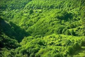 قابلیت جذب دی اکسید کربن توسط جنگلها محدود است