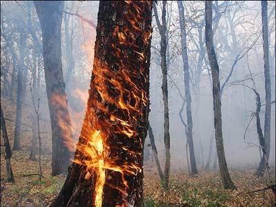 وقوع ۲۰۰ فقره آتشسوزی در جنگلها و مراتع کشور