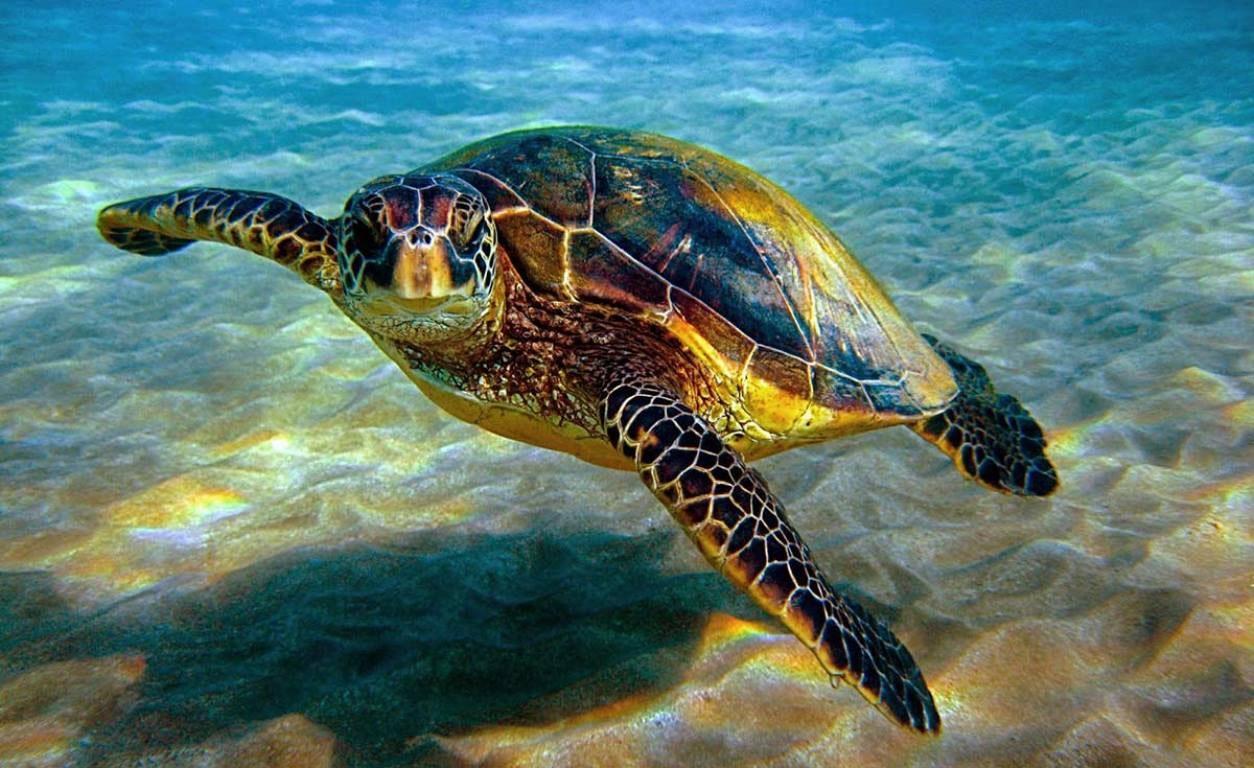 ۱۰ گونه دریایی خلیج فارس در خطر انقراض است