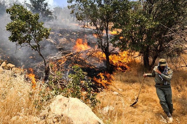 آتش زدن مزارع تهدیدی برای جنگلهای گلستان