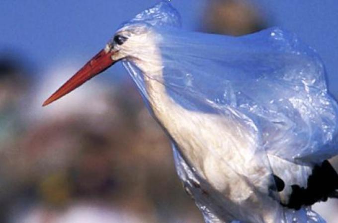 مرگ سالانه ۱۰۰ هزار حیوان در اثر تغذیه پلاستیک
