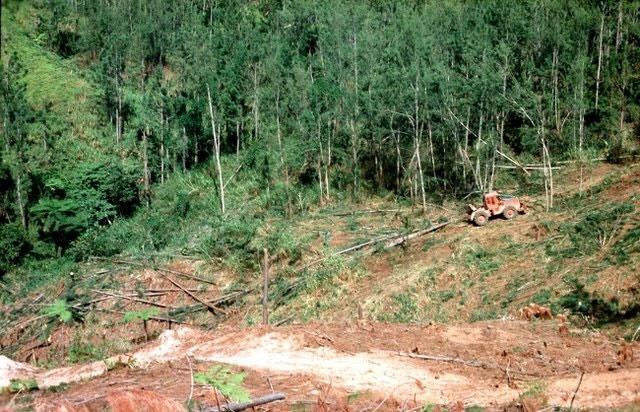 طرح احیای جنگلهای فیجی تا سال ۲۰۳۰