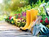 مجله گیاه، باغ و باغبانی