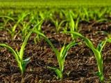 توسعه یک باکتری خاص برای بینیاز کردن گیاهان از کود