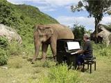 پیانیست و فیل نابینا