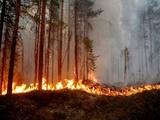 آتشسوزیهای گسترده سوئد در پی موج گرما