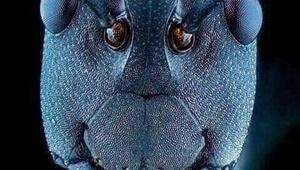 عکس | رخ در رخ مورچهها