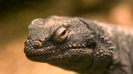 استرالیا,انقراض گونهها,محیط زیست جهان,حیوانات