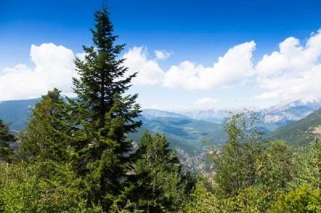 محیط زیست جنگل,محیط زیست جهان,گازهای گلخانهای,سازمان ملل
