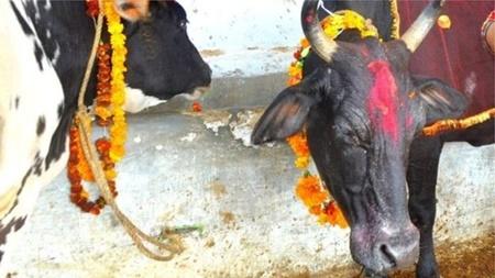 مردی در هند به ظن قاچاق گاو کشته شد