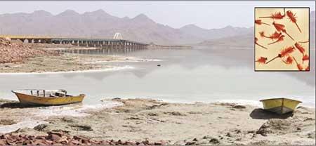 آرتیما  دریاچه ارومیه