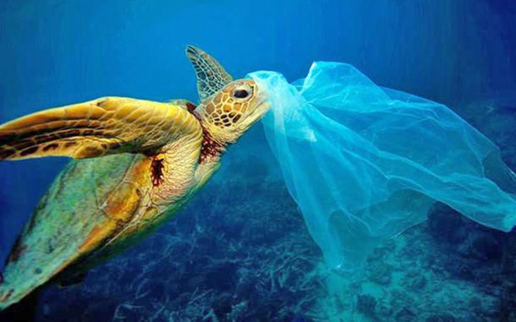 کیسه پلاستیکی در دهان لاک پشت