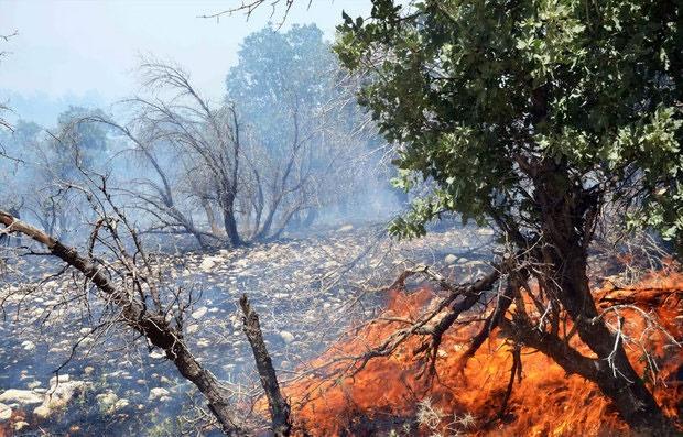 ۱۸۰ هکتار از اراضی میانکاله در آتش سوخت