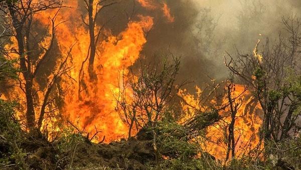 علت ۹۵ درصد آتشسوزی جنگلهای ایران بیاحتیاطی یا عمدی است