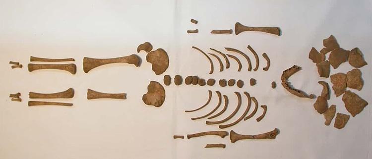 کشف نمونههای نرمی استخوان در دوران روم باستان