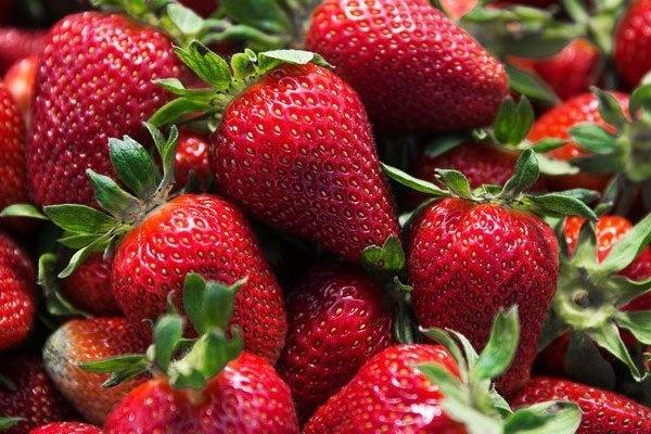 توت فرنگی بخورید تا دچار التهاب روده نشوید