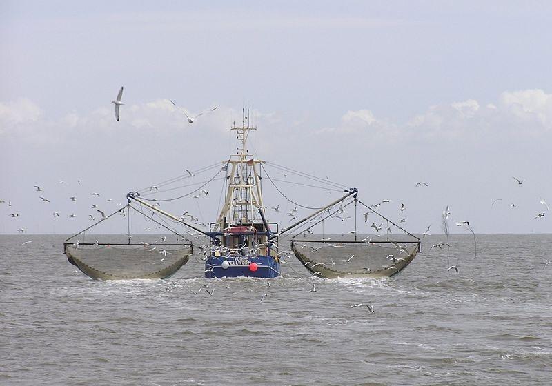 واکنش سازمان محیط زیست به ماجرای ماهیگیری چینیها