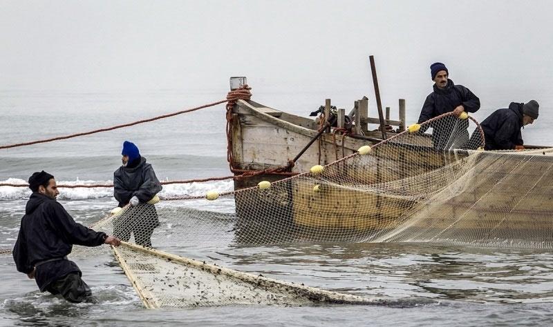 وضعیت ماهیان خاویاری رو به وخامت است