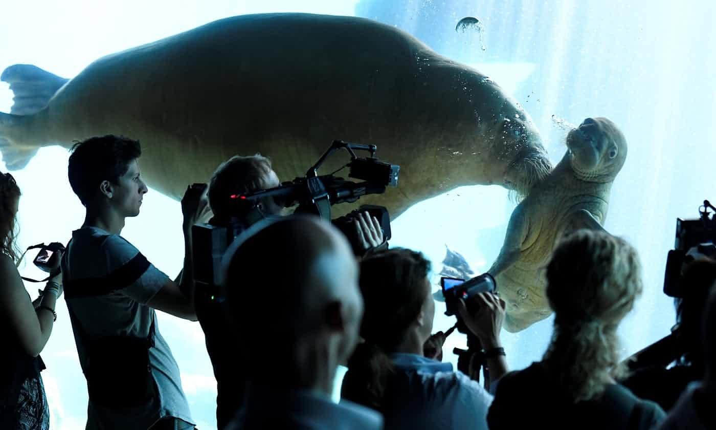 عکس روز: گراز دریایی