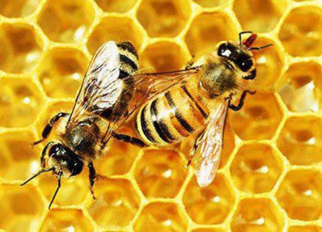 دولت ترامپ به زنبورها هم رحم نمیکند