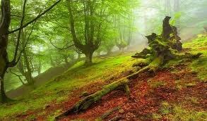 توان جنگلها در حبس گازهای گلخانهای کاهش یافته است