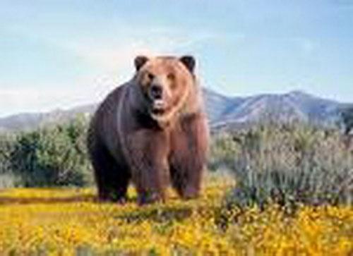 کشف جسد یک قلاده خرس قهوهای در خراسان شمالی