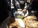 عزت الله انتظامی در کنار خسرو شکیبایی آرام گرفت