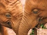 فیلها چگونه سرطان را شکست میدهند و عمر طولانی دارند؟   امیدواری به درمان سرطان