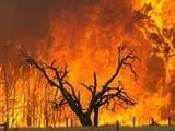 آتشسوزی ۴ هکتار از ارتفاعات شاه جهان طی هفته جاری