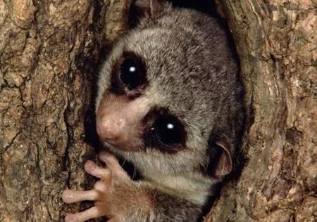 انقراض گونهها,ماداگاسکار,محیط زیست جهان,حیوانات