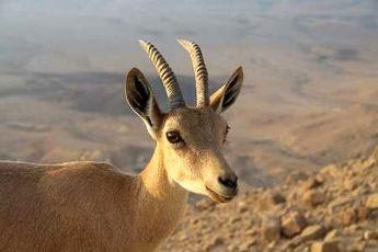 گونههای جانوری همدان ۱۳ درصد افزایش یافت