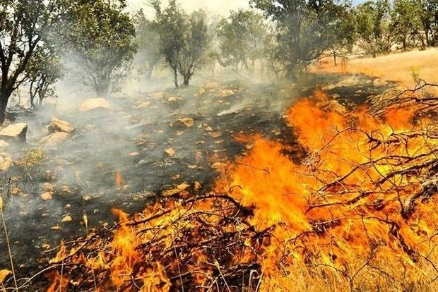 ارتفاعات جنگلی درازنو دچار آتشسوزی شد
