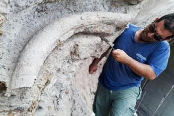 کشف فسیل ۲۰ میلیون ساله در استان اردبیل
