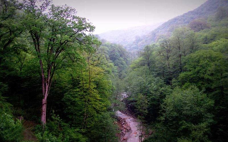 آشنایی با جنگلهای هیرکانی
