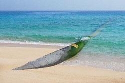 انتقال آب خلیج فارس به سه استان | سرمایهگذاری ۱۸ هزار میلیارد ریالی ۹ بانک