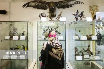 آشنایی با موزه طبیعت و حیات وحش ایران - دارآباد