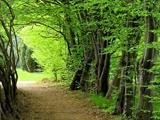 ارزیابان یونسکو جنگلهای هیرکانی را بررسی میکنند