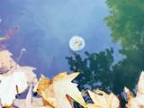 «آغاز پاییز» و شعرهای دیگر