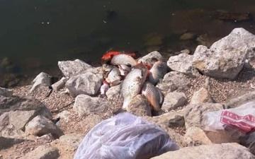 کاهش اکسیژن آب برکه پارک فروزان عامل مرگ ماهیها