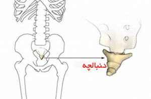 استخوان دنبالچه در انتهای ستون فقرات