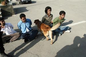 از سگ برای شناسایی مواد مخدر استفاده میکنند. البته اینجا حیوونکی فقط دارد رد میشود و کاری با بقیه ندارد